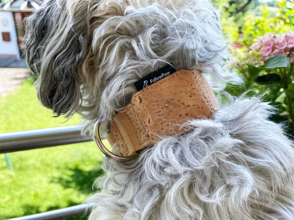 Ein kleiner Hund, viel Fell und ein breites Halsband führen zwangsläufig zu einer etwas unförmigen Kombination.